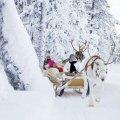 reindeer_come.jpg